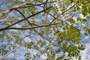 グレイスアップ 植物