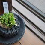 植物,柱サボテン,南大阪