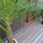植物,フェニックスロベレニー,エクステリア